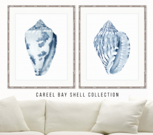 designer boys careel bay shell collection